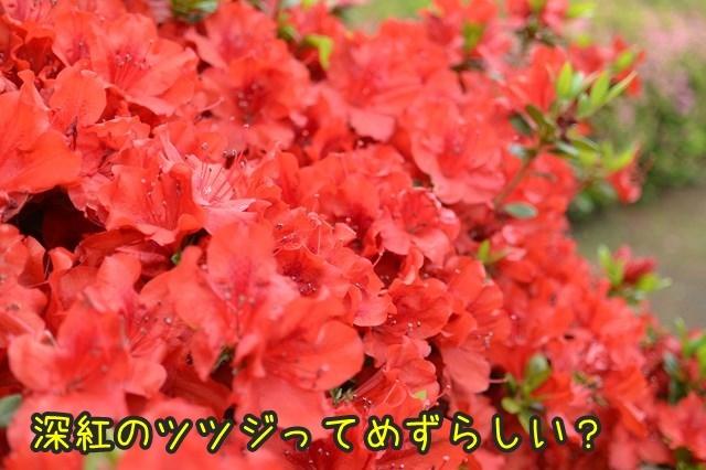 a-DSC_9084.jpg
