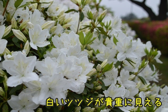 a-DSC_9093.jpg
