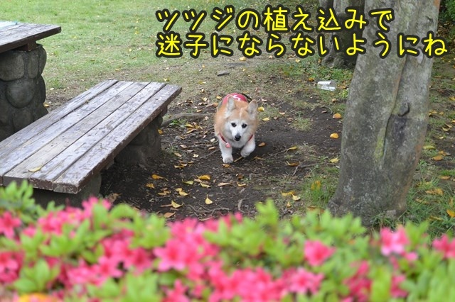 a-DSC_9097.jpg