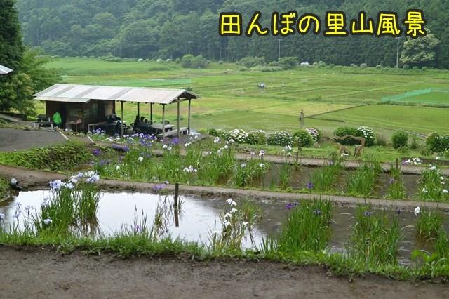 a-DSC_9199.jpg