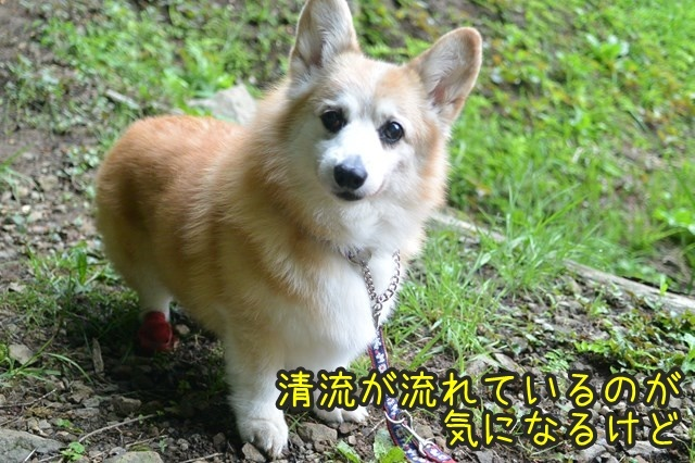 a-DSC_9203.jpg