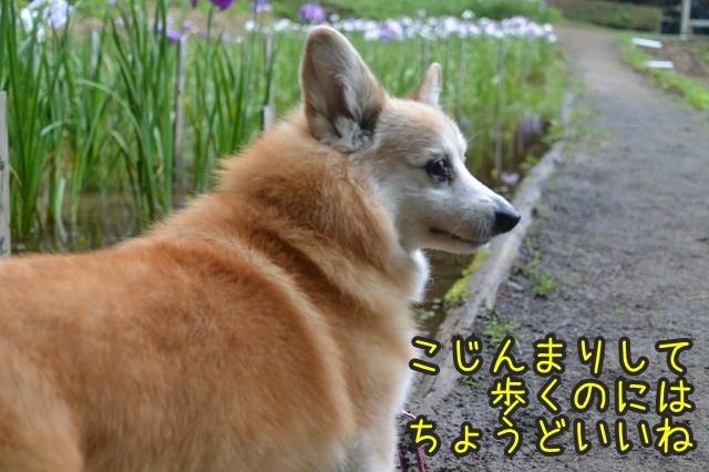 a-DSC_9207.jpg