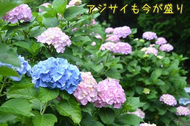 a-DSC_9209.jpg