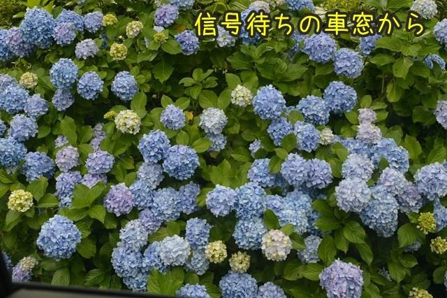 a-DSC_9474.jpg