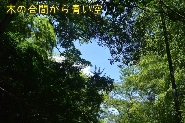 a-DSC_9521.jpg