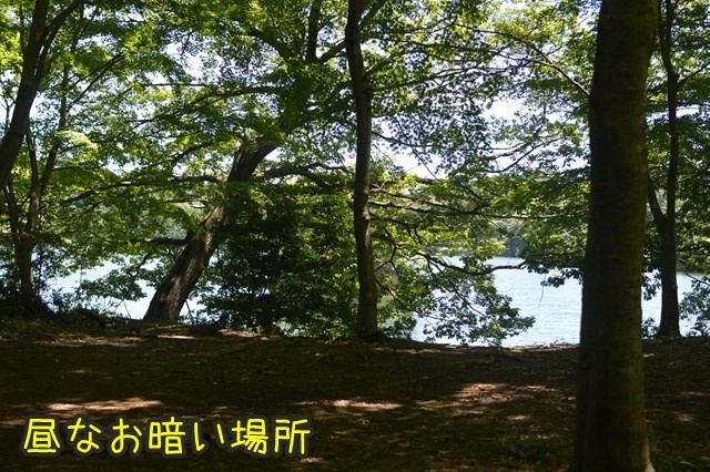 a-DSC_9528.jpg