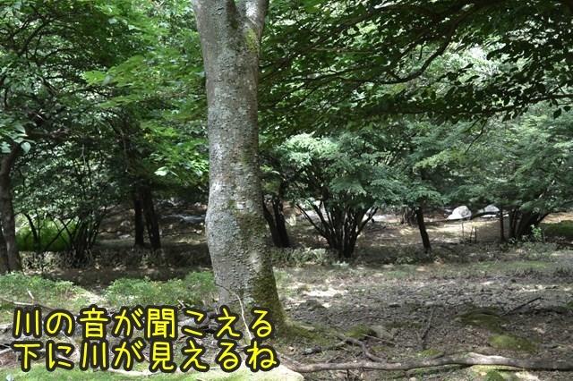 a-DSC_9593.jpg