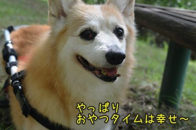 a-DSC_9669.jpg