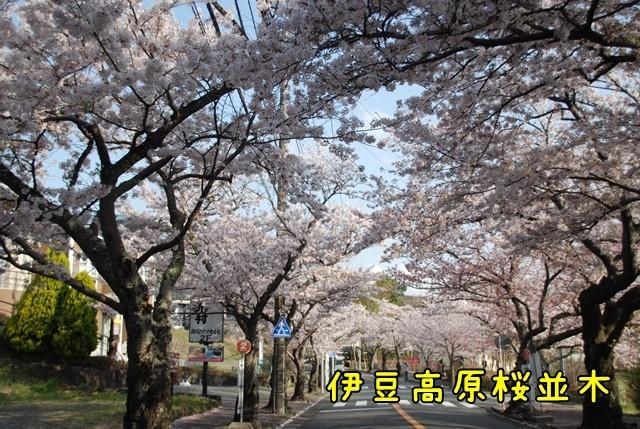 c-DSC_5839.jpg