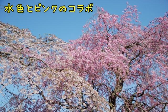 c-DSC_5880.jpg