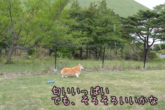 s-DSC_8844.jpg