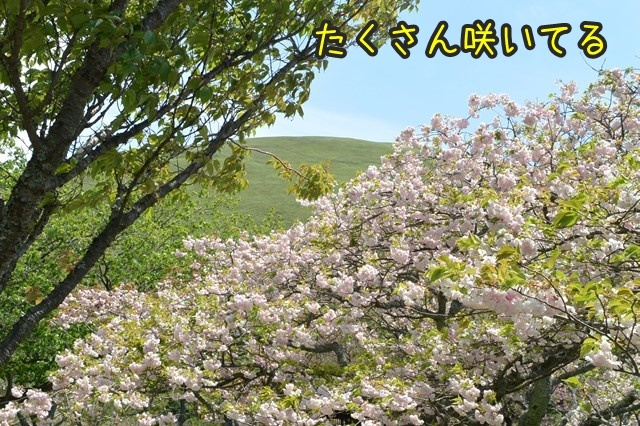 s-DSC_8989.jpg