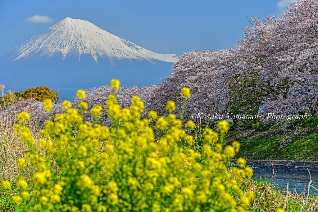 春! (静岡県 富士市)