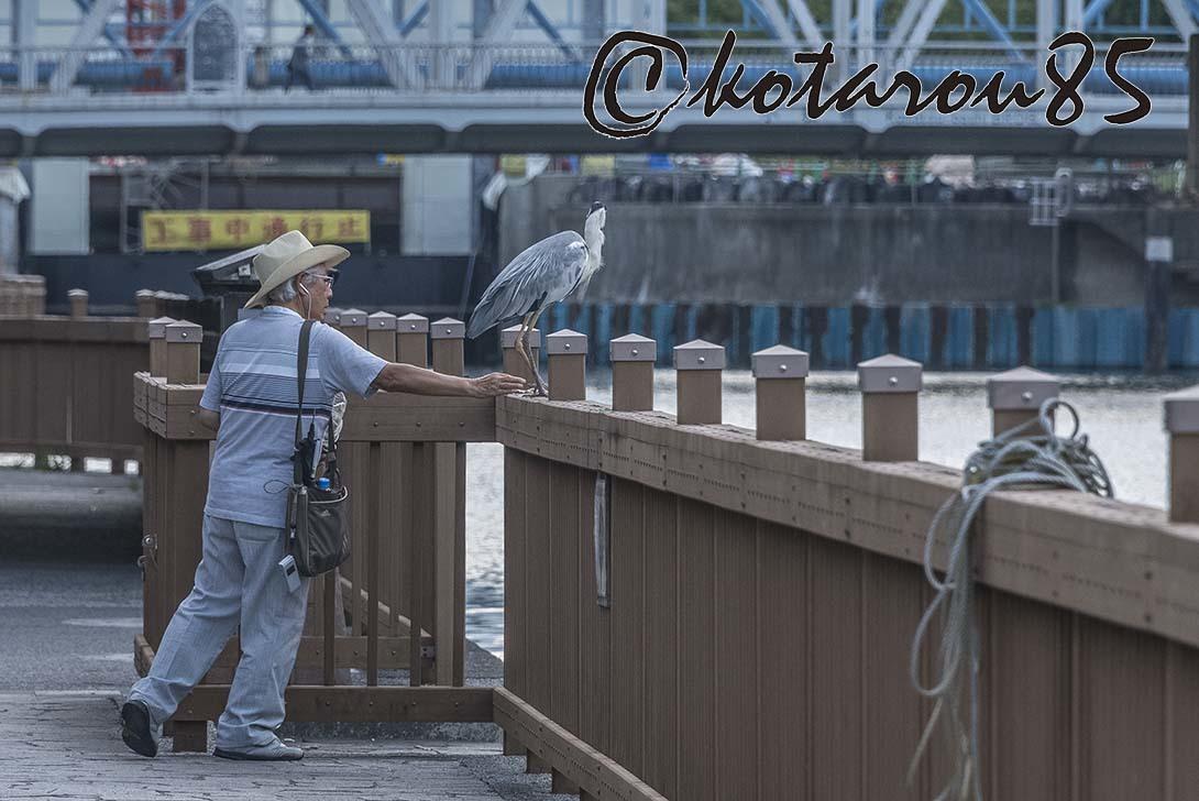 小名木川の住人4 20180711