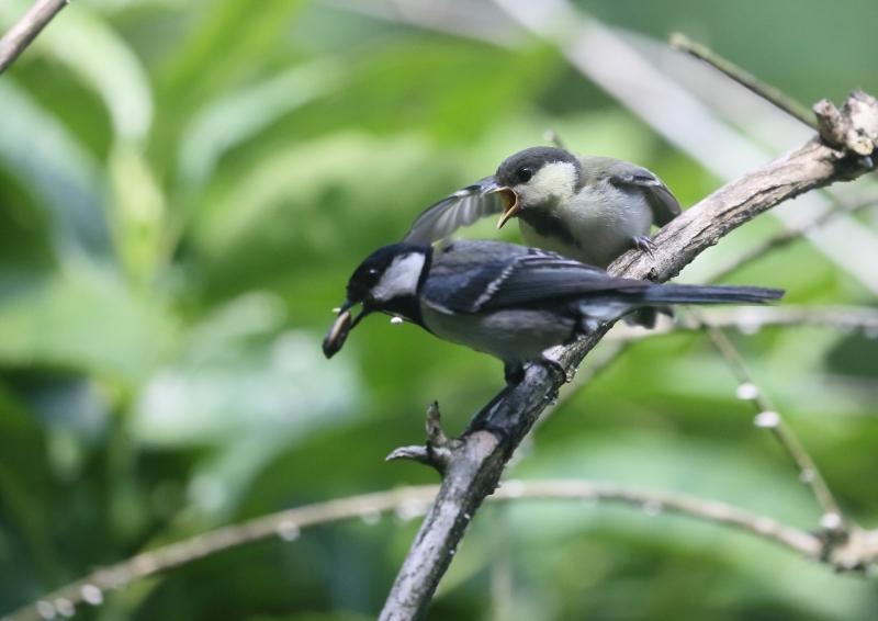 19日幼鳥④