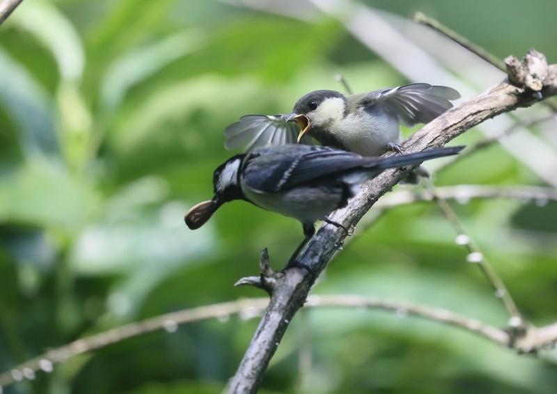 19日幼鳥⑥