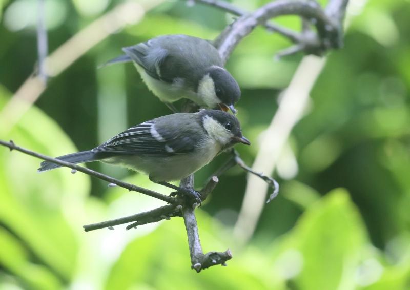 19日幼鳥⑭