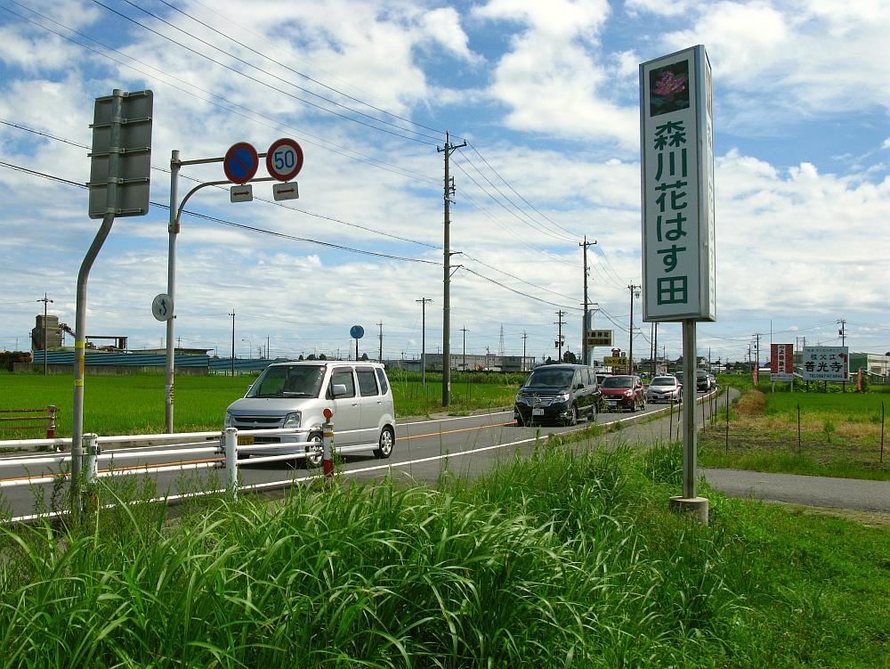 2017_08_13愛西:森川花はす田002