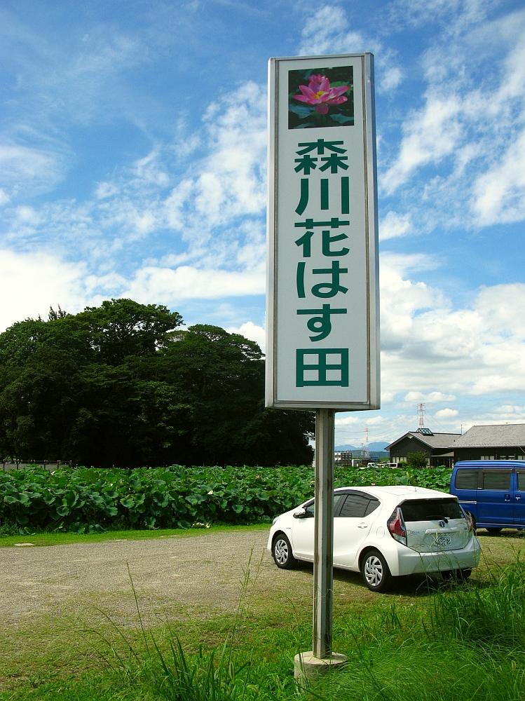 2017_08_13愛西:森川花はす田003