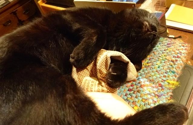ダリオ抱枕1