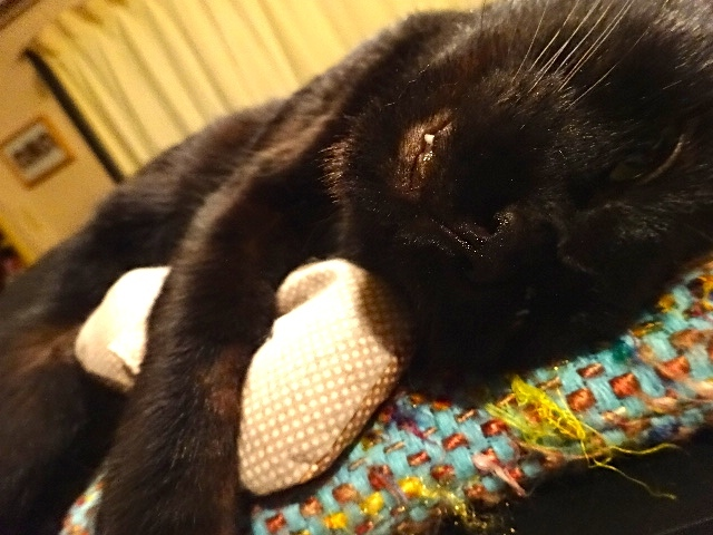 ダリオ抱枕2