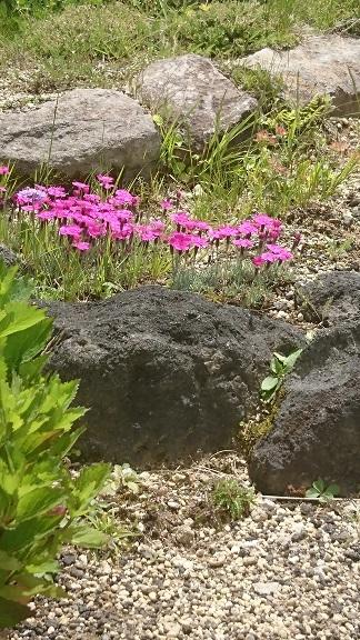 ソラテラス花