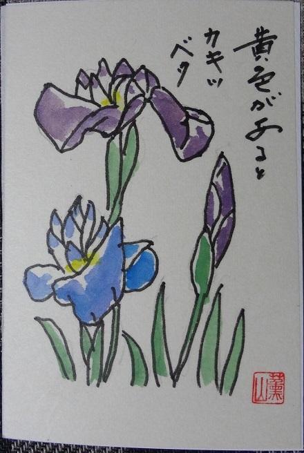 61かきつばた絵手紙3
