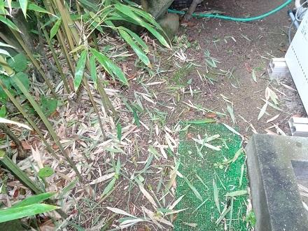 12竹に除草剤20180615