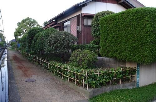 12庭の剪定20180616