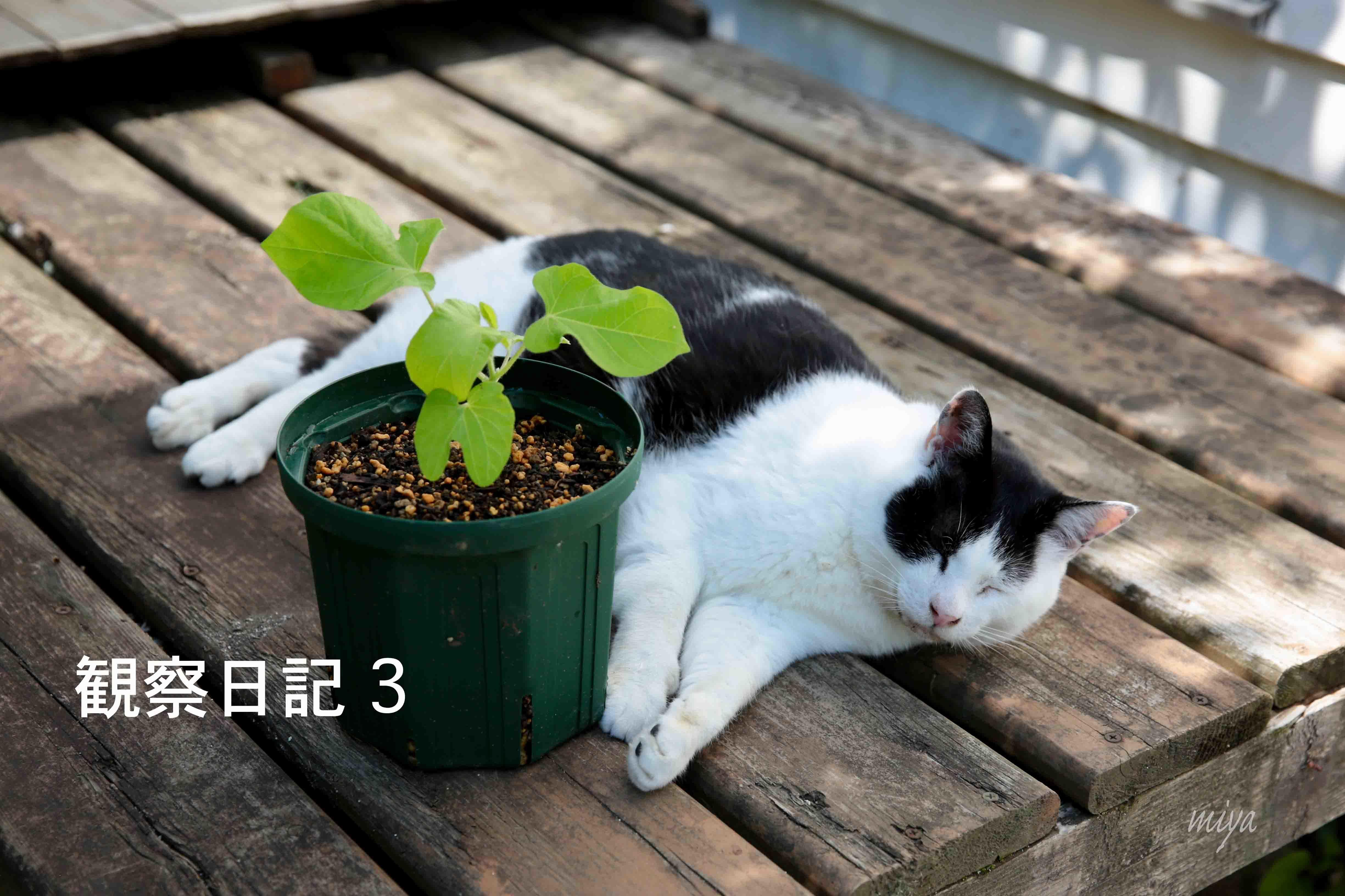 団十郎観察3m032A2419