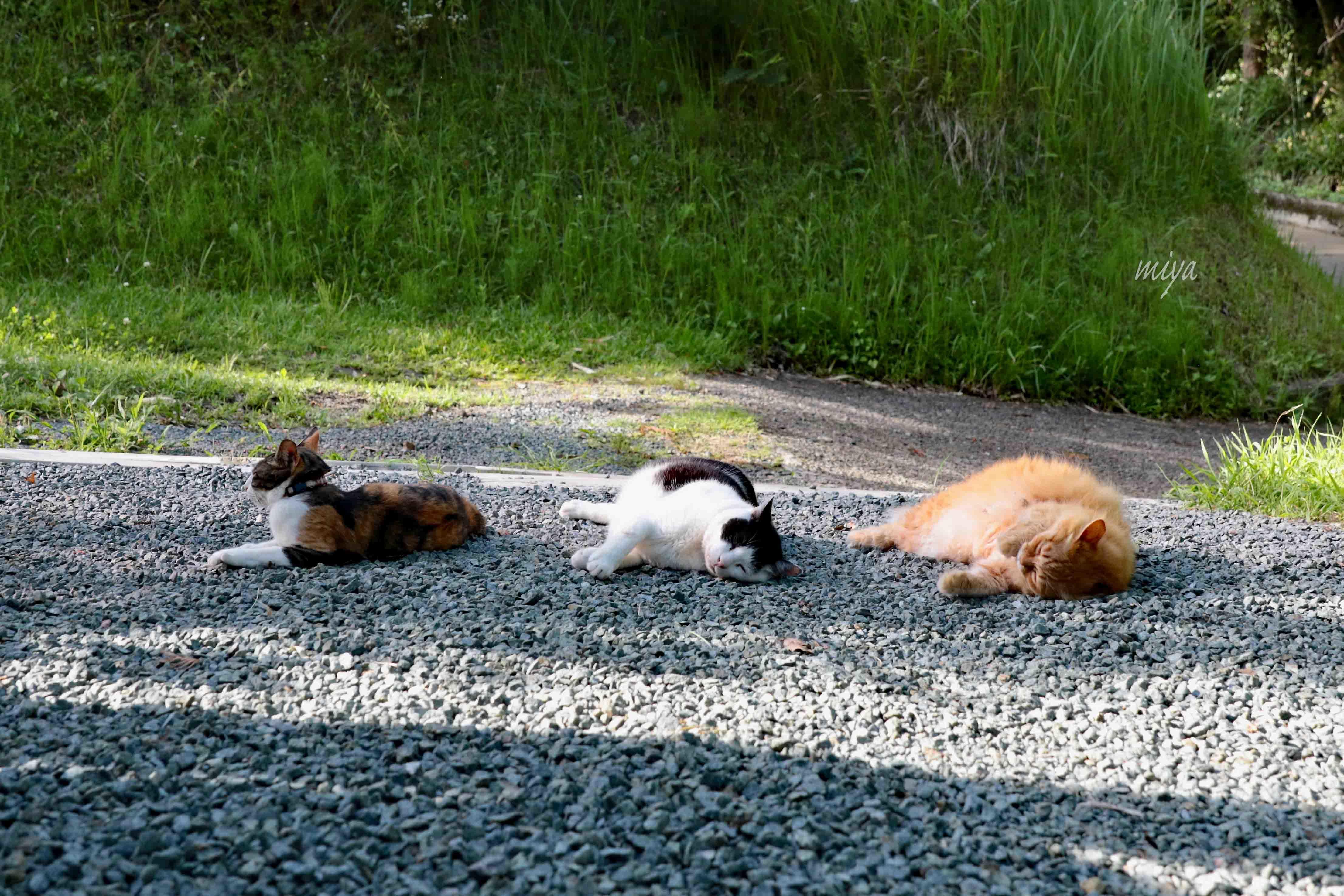 猫3夕涼みm995A9932