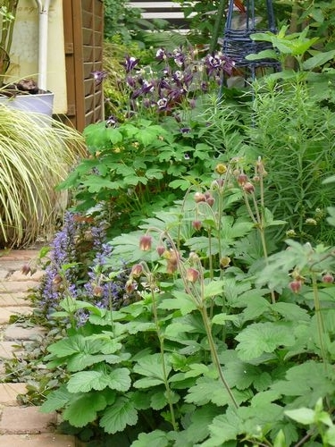 〈園芸〉今日の庭