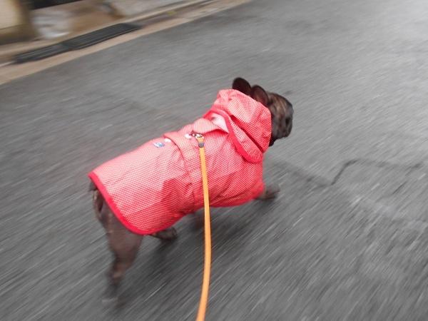 180620雨ふて寝後の小雨散歩02
