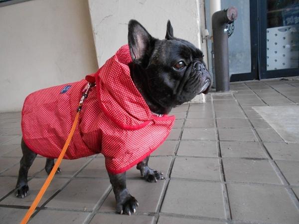 180620雨ふて寝後の小雨散歩03