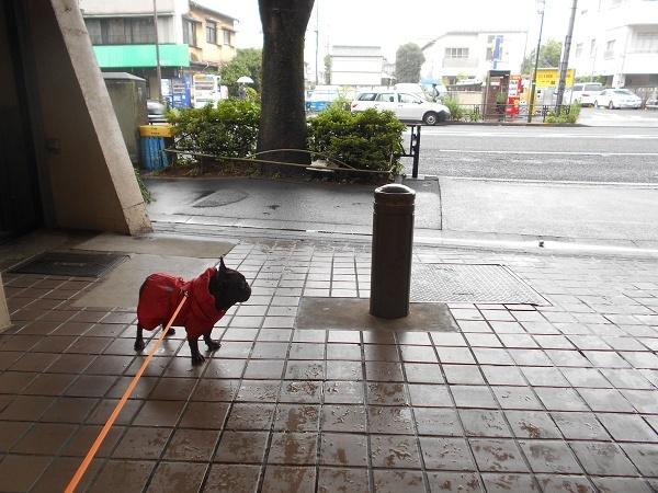 180620雨ふて寝後の小雨散歩04