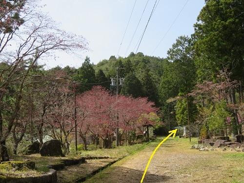 daihakase (8)
