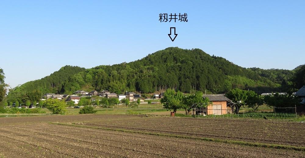 momii (4)