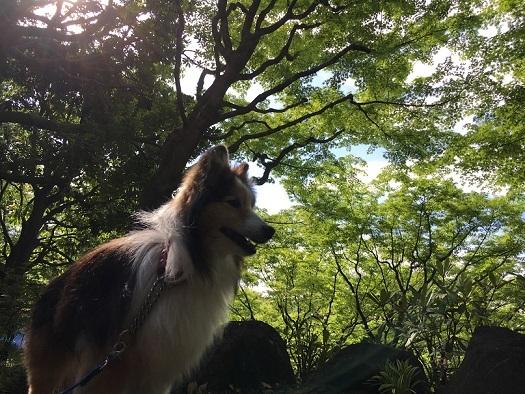 横浜公園0