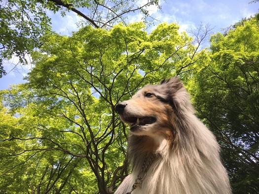 代々木公園散歩1