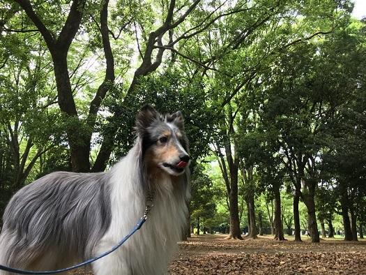 代々木公園散歩2