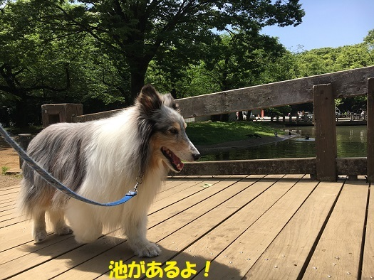 代々木公園散歩4