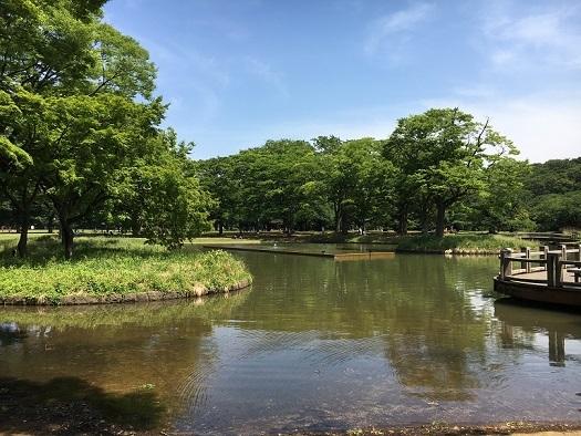 代々木公園散歩5
