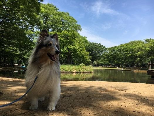 代々木公園散歩6