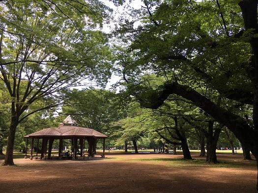 代々木公園散歩9