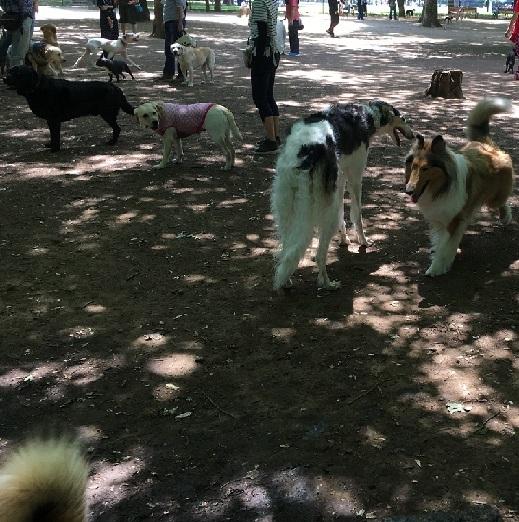 代々木公園散歩91