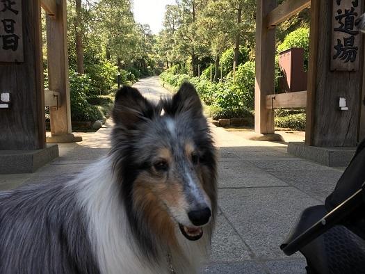 お寺散歩5