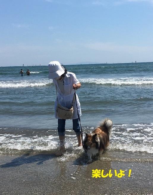 海楽しい4