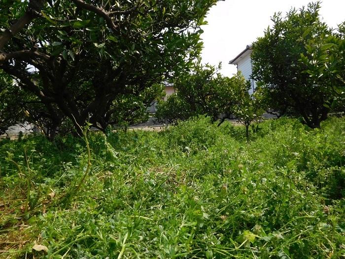 草刈り3004