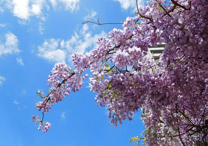 花盛り3004-2