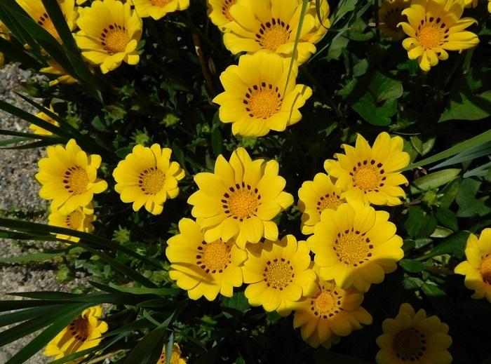咲き乱れ23004